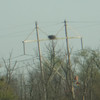 Osprey nest picture- outside town