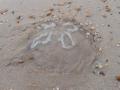 beachfind1