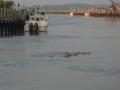 boatsnducksmurderkill