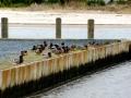 ducksboatdocks