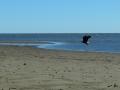 eagleonbowersbeach