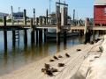wharfnducks